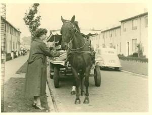 groenteboer Snelliusstraat 1953 GAE 49392